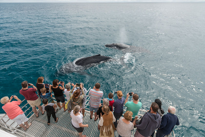 Tourists watching Humpback whales (Megaptera novaeangliae), surfacing, Hervey Bay, Queensland, Australia September 2016.