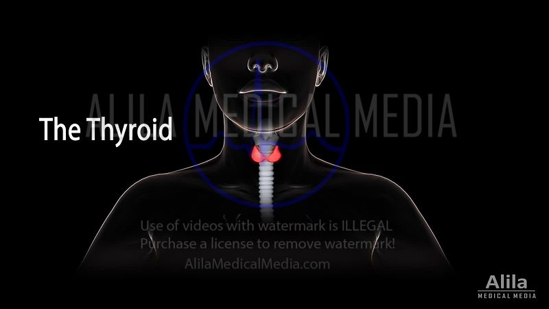Thyroid gland, hormones and problems NARRATED animation