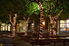 Trees Wrapped with Lights #1