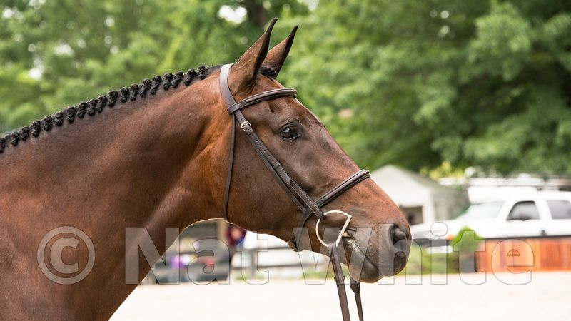 Horse_at_Upperville--DSC_9291-June_04_2015