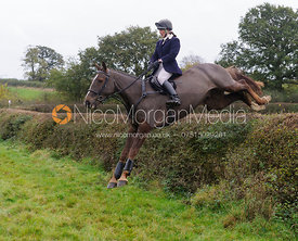 Jumping a big hedge - Quorn at Barrowcliffe 1-11-13
