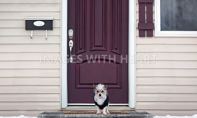 Little dog waiting at the front door
