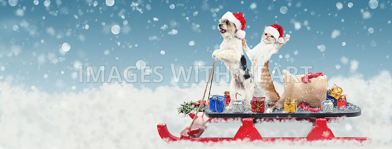 Cat and Dog on Christmas Santa Sleigh