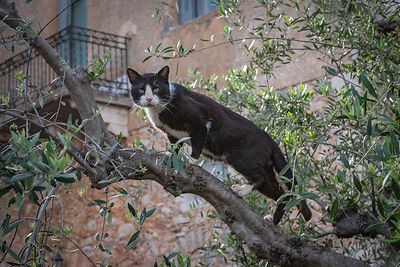 Cat on a tree branch