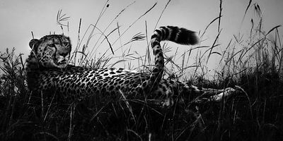 03730-Cheetah_in_the_plain_Laurent_Baheux
