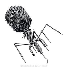 Bacteriophage T4 monochrome shaded on white