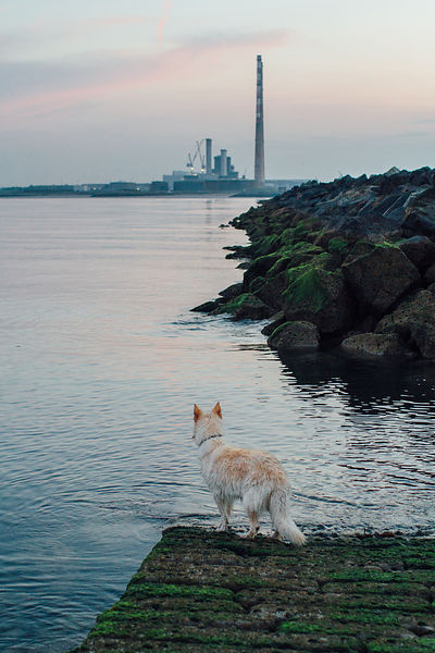 lupa_poolbeg_waterside