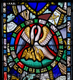 19th century Stained glass window in St Cuthbert's Chapel on Inner Farne Island Northumberland depicting a pelican in her pie...