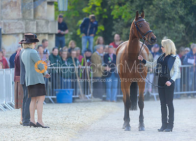 Megan Heath and ST. DANIEL - Mitsubishi Motors Badminton Horse Trials 2013