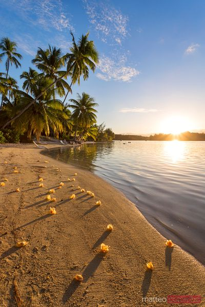 Tropical beach at sunset, Moorea, Tahiti, French Polynesia