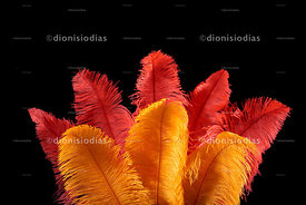 Background with detail of carnival fancy feathers in yellow and red