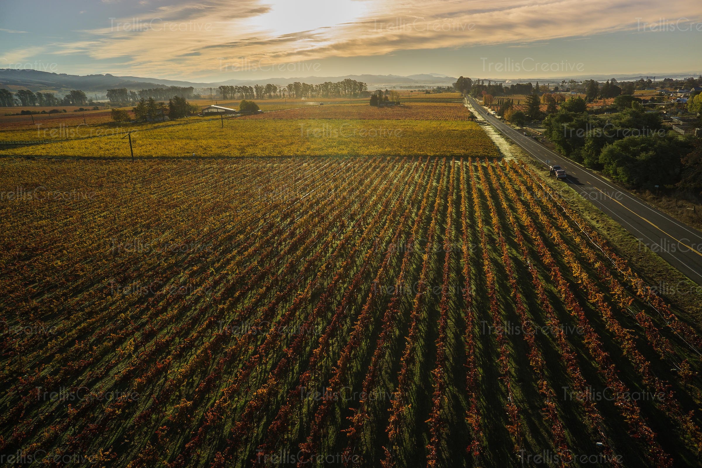 An aerial view of a road running along the vineyards with changing colors of the Fall season