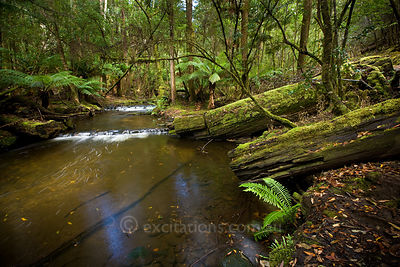 Mountain stream, Tasmania.