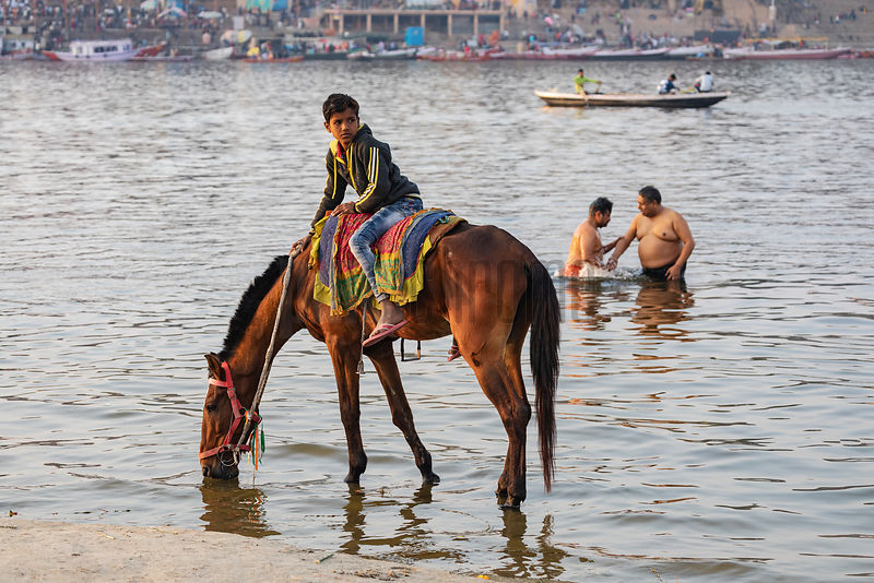 Horse Taking a Drink while Men take a Dip in the Background