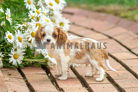 wet and dirty puppy standing next to daisies