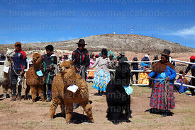 Owners wait with their alpacas before judging during competition, Curahuara de Carangas, Bolivia