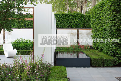 Buxus, Contemporary garden, Digital, Geometrical pool, Hedge, Low hedge, Pavement, Pergola, Terrace, Common Box, Contemporary...