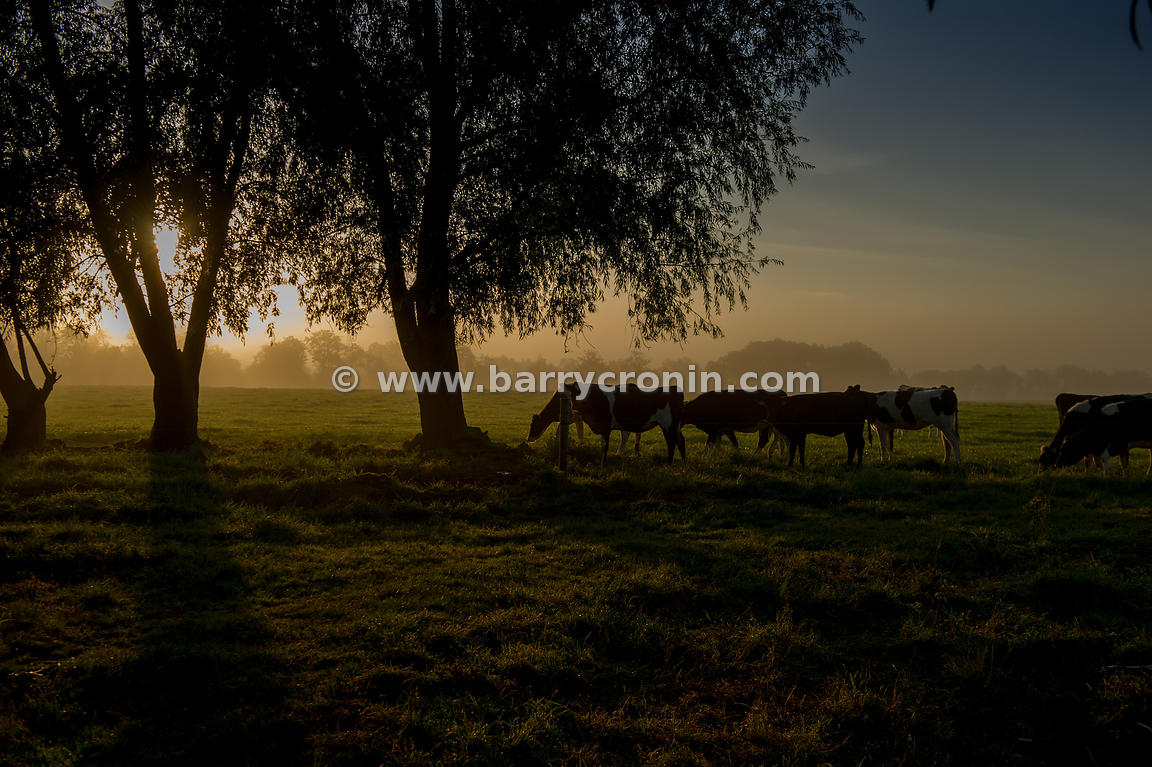 10th September, 2014.The morning sun rises over Summerville's field, Wilkinstown, Navan, County Meath.Photo:Barry Cronin/www....