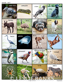 animals_set2_ds