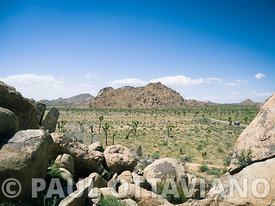Joshua Tree Landscape 2 | Paul Ottaviano Photography