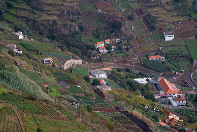 Aerial view of housing and cultivation on hillside terraces, Madeira, November