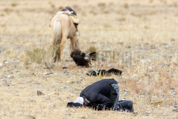 Kazakh Eagle Hunter Praying in the Steppe