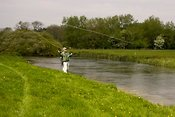 Trout fishing on River Anton, Hampshire