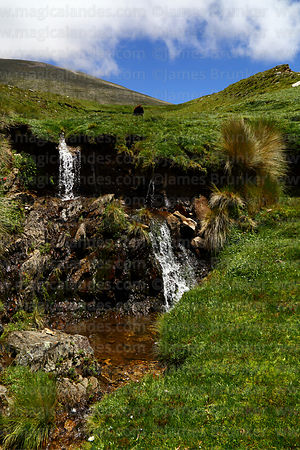 Waterfalls near Abra Calderillas pass, Cordillera de Sama Biological Reserve, Bolivia