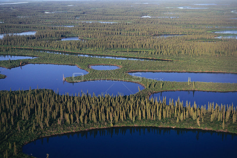Aerial view of Taiga forest and wetlands, Mackenzie river delta, Inuvik, Yukon, Canada