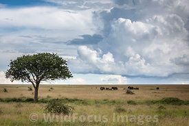 Scenic shot of elephants (Loxodonta africana africana) on the grassy Serengeti plains, Serengeti National Park, Tanzania; Lan...