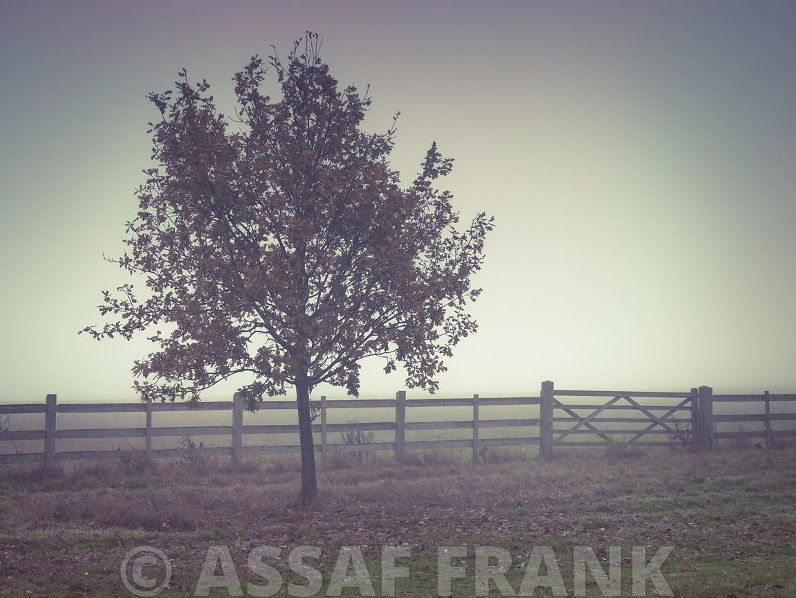 Tree by fence on a misty day