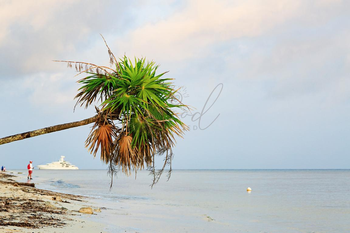 Palm Tree Leaning Over Sea With Ship and Fisherman