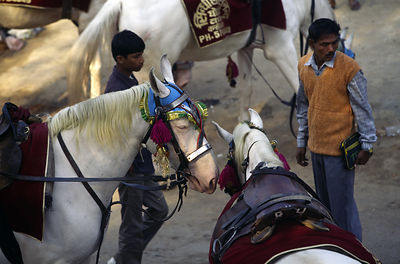 India - New Delhi - Men waiting to send horses to a wedding show from ther stables in Shadipur