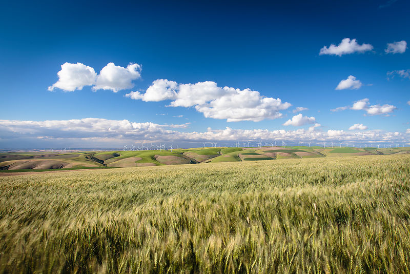 Owen_Roth_Photography-June_18_2016-Palouse_County-1386-00002
