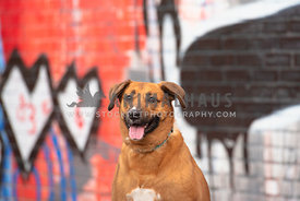 medium brown mix smiling sitting in front of colorul grafitti wall