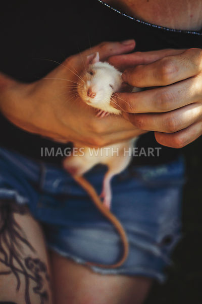 gently holding white rat