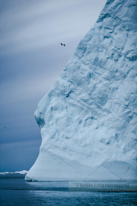 A bird flies by an iceberg that looks like the profile of a head in Ilulissat