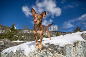 Chihuahua with blue sky in mountains