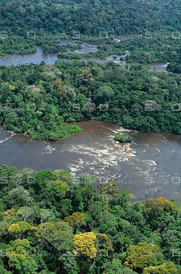 Biodiversity and Blooming Tree in Amazon Rainforest Canopy Jari River Brazil