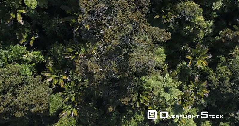 Drone Video Punakaiki Rainforest New Zealand