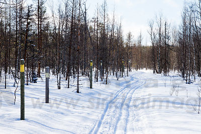 Skiing track on the border of Finnish border zone against Russia