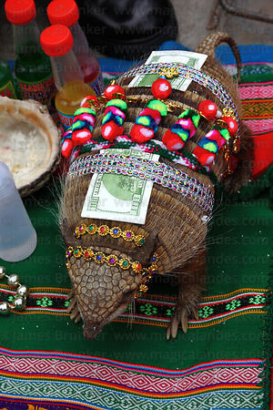 Decorated Andean hairy armadillo (Chaetophractus nationi) on stall of Kallawaya medicine man, Alasitas festival, Bolivia