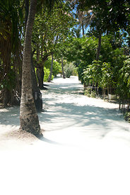 An image of palm trees lined path on a tropical white sandy beach in the Maldives.