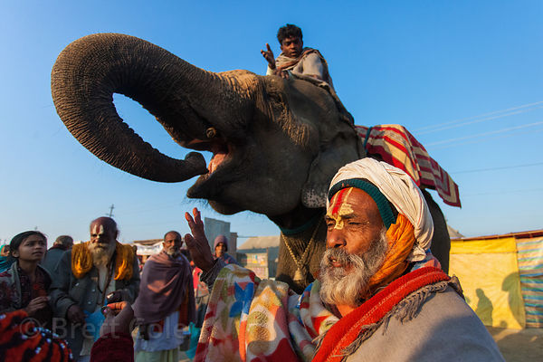 Elephant at the 2013 Kumbh Mela, Allahabad, India.