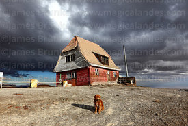 Dog and stormy skies above the old ski hut on Mt Chacaltaya, Bolivia