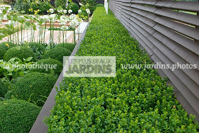 Ball shaped, Bush, Buxus, Contemporary garden, Evergreen, Sphere shaped, Topiary, Trellis, Common Box, Digital