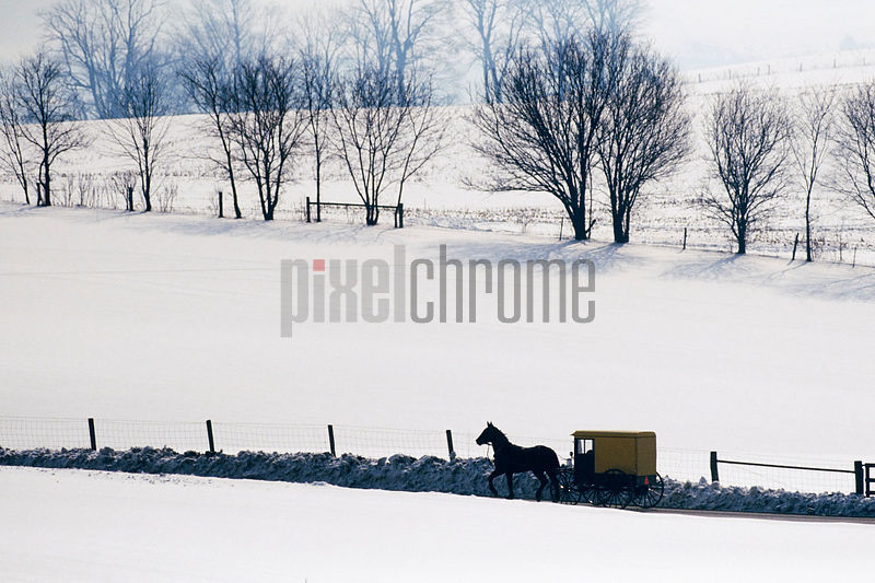 Amish Horse and Buggy in Snowy Landscape