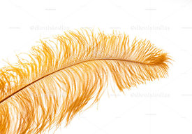 Carnival Fantasy feather background in yellow isolated on white