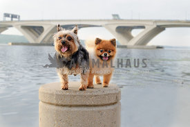 two dogs on pillar under bridge on river