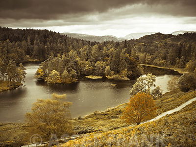 Trees by lake, lake district national park, UK